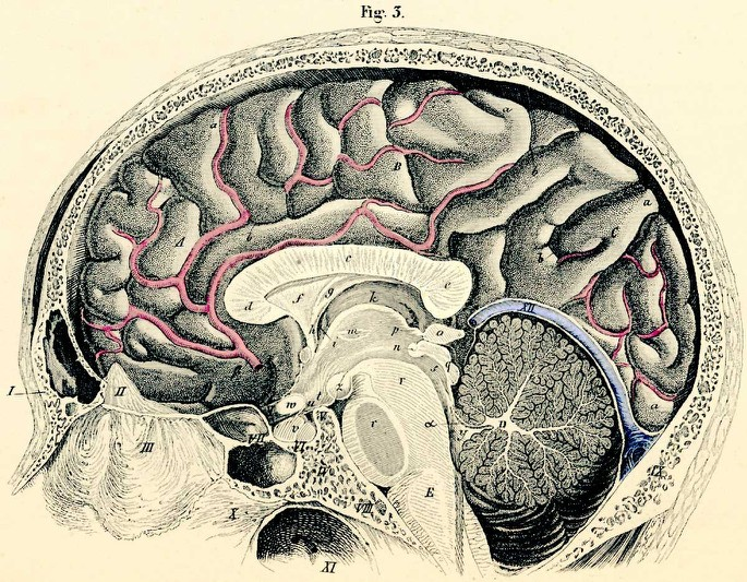 Descartes and the Pineal Gland > Figure 1 (Stanford Encyclopedia of ...